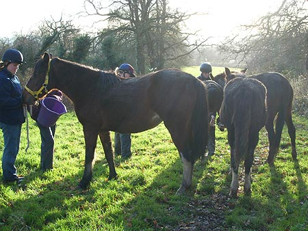 Harrow horse rescue
